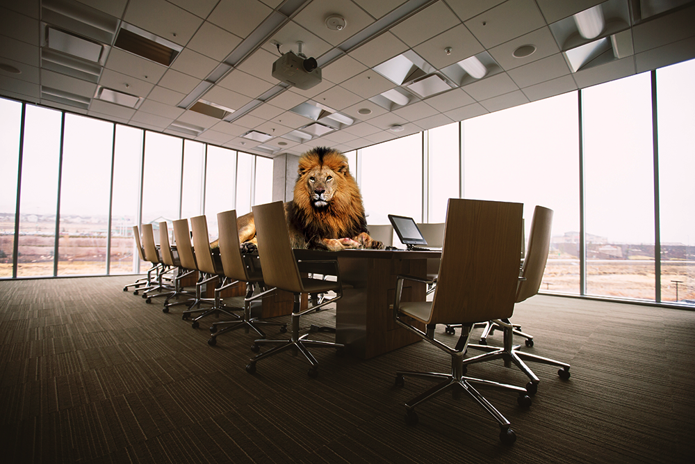Taming corporate lions - entity management 101